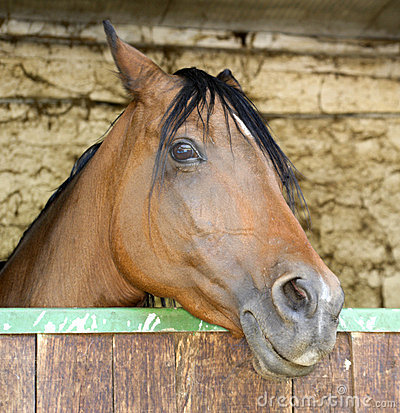 Horse sticking head out of stable