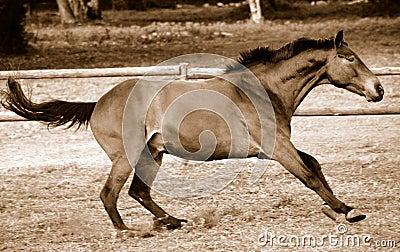 Horse racing in sepia