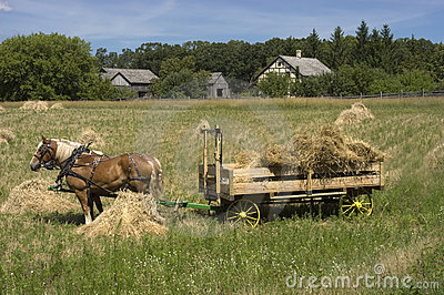 Horse Team Hay Wagon Farm Harvest Time