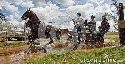 Horse team race Editorial Stock Photo