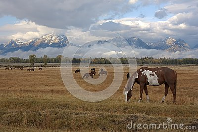 Horse and Tetons