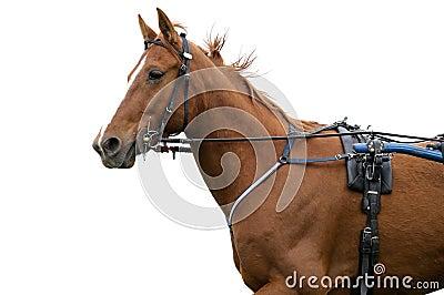 Horse three
