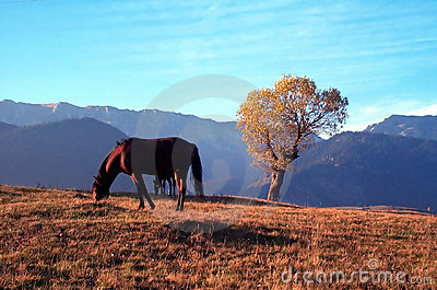 Horse and tree Stock Photo