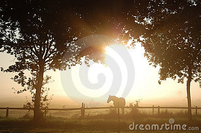 Horse and trees in morning fog