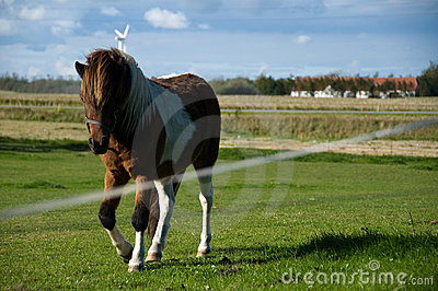 Horse trotting on field