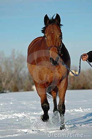 Horse trotting in snow