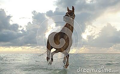 Horse trotting at sunrise