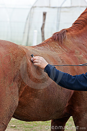 Horse - veterinary examination
