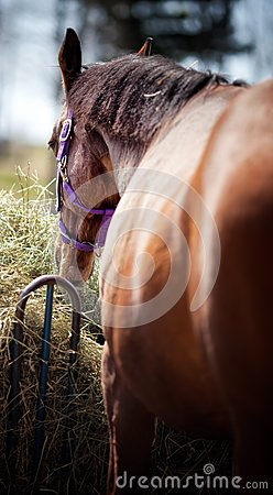 Horse View from Backside with Focus on Face