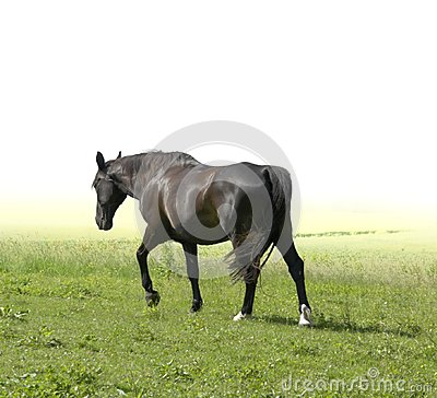 Horse walking away