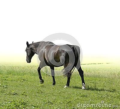Horse walking away