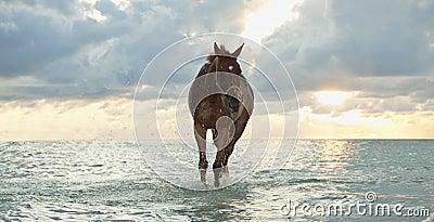 Horse walking at the beach