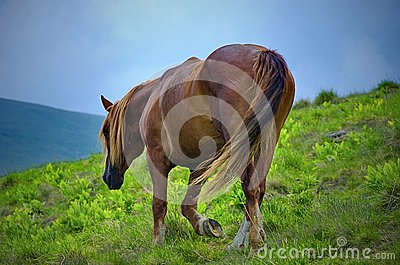 Horse walking on a fresh mountain pasture