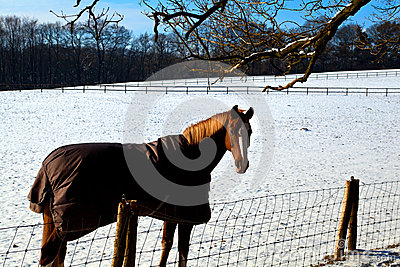Horse in warm blanket on winter pasture