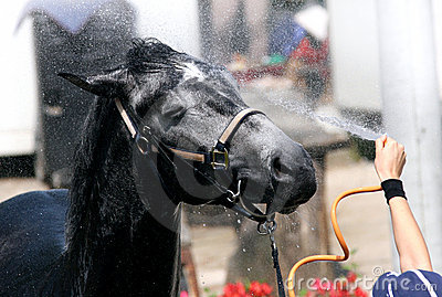 Horse Wash