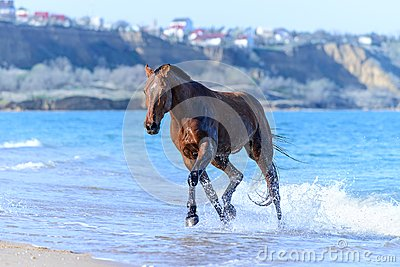 Horse in the water