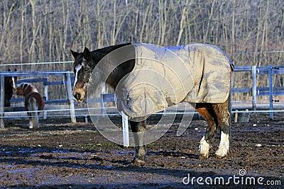 Horse wearing a blanket