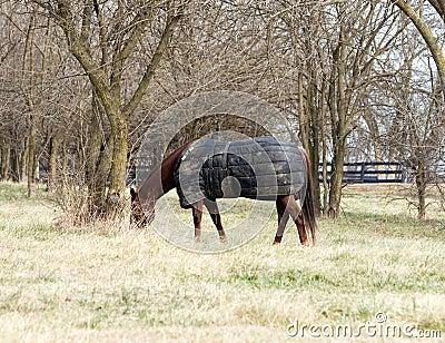 Horse Wearing Blanket