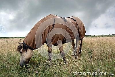 Horse wearing sweet itch blanket