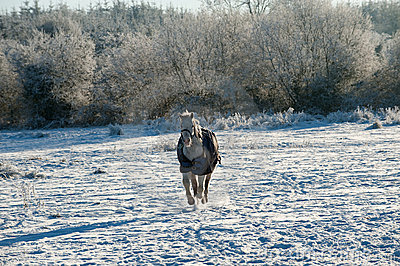 A horse wearing a winter blanket