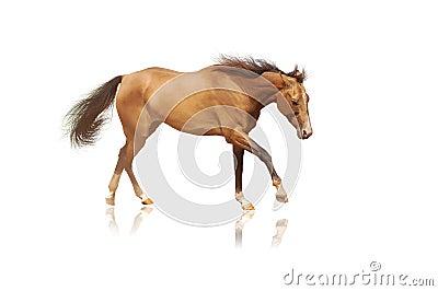 Horse on white