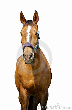 The horse with white stripe