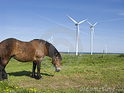 Horse and wind turbines