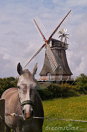 Horse and windmill