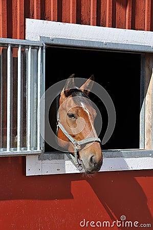 Horse in window