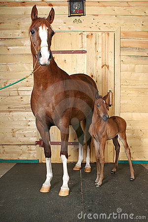 Free Horse With A Foal Stock Photo - 692200