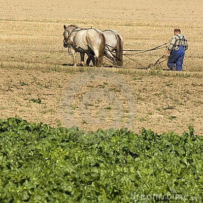 Free Horse Working In The Field Royalty Free Stock Photo - 6855335