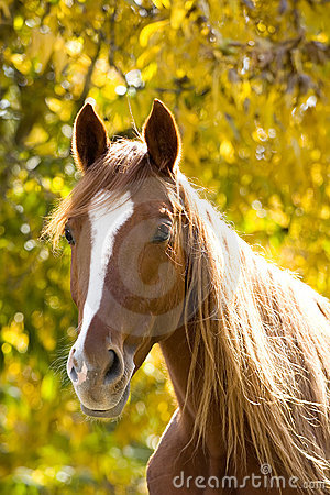 Horse on yellow