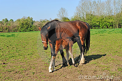 Horse with young foal