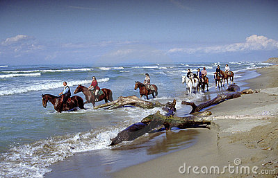 Horseas in beach