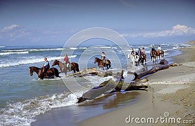 Horseas in beach