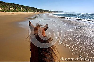 Horseriding on beach