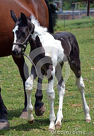Free Horses 223 Royalty Free Stock Image - 41907156