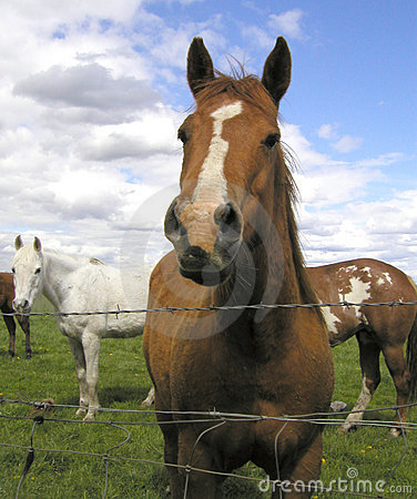 Horses 3 Stock Images - Image: 105584