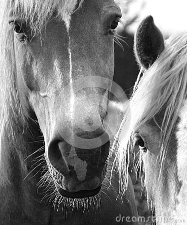 Free Horses Royalty Free Stock Photography - 44759037