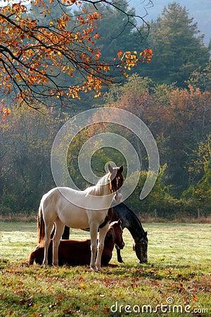 Free Horses Royalty Free Stock Image - 5081886