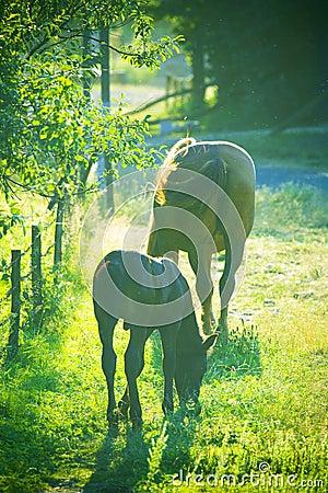 Free Horses Stock Image - 5859071