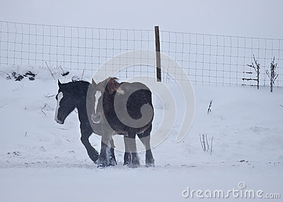 Horses Against the Wind