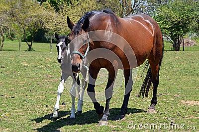 Horses 200