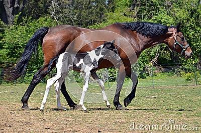 Horses 201