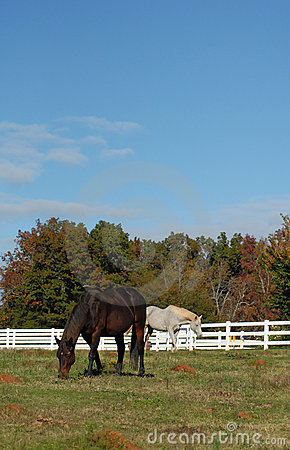 Horses  and blue sky