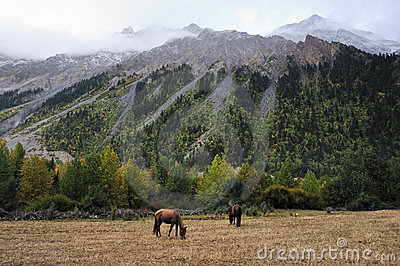Horses browsing by the mountains Editorial Stock Photo