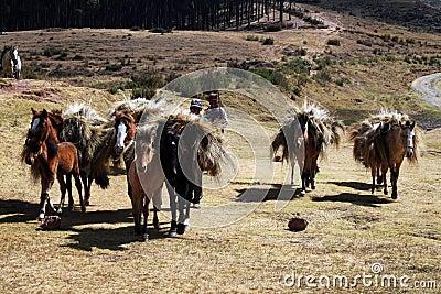 Horses caravan Editorial Photo