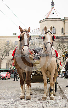 Horses and carriage in Lviv Editorial Stock Photo