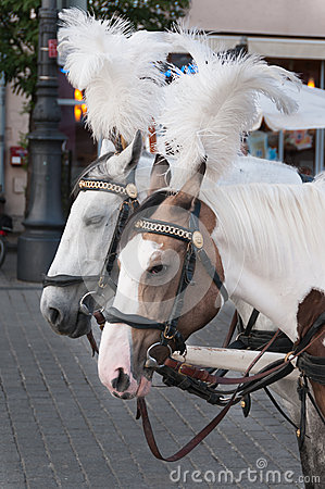 Horses with carriage on the The Main Market Square in Krakow