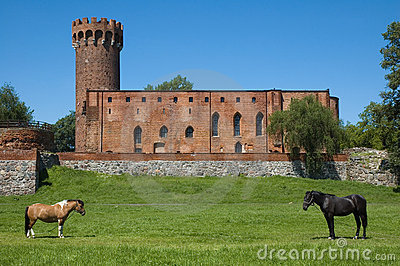 Horses with the castle in the background